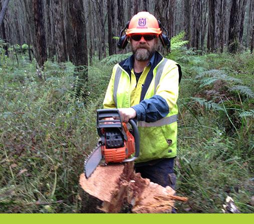 Arboriculture & Electrical