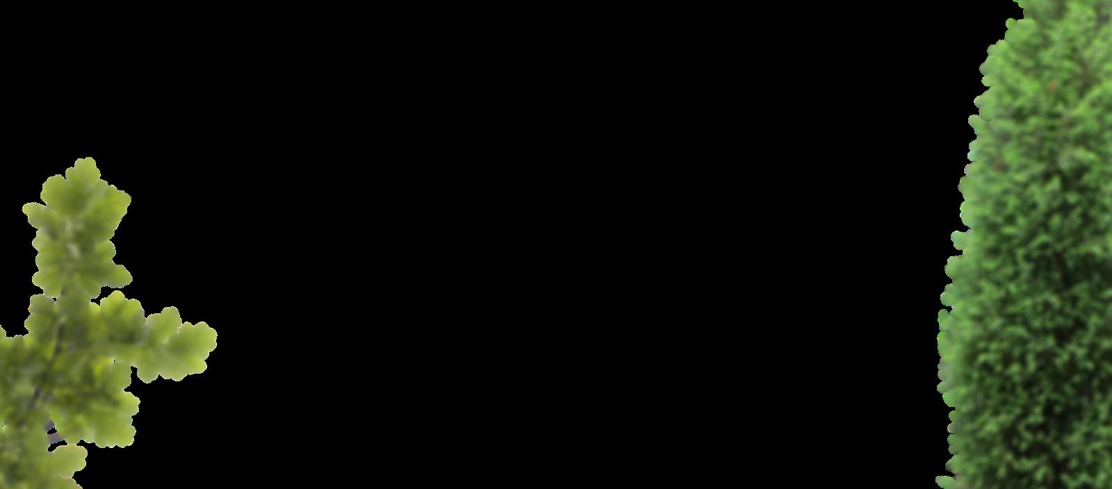 layer-slider-tree-blur