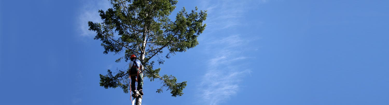 tree-sky1