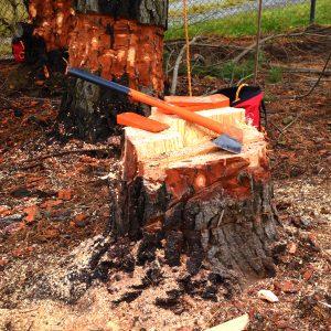 FREE Tree felling