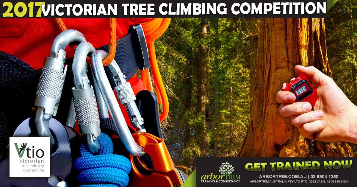 2017-victorian-tree-climbing-comp